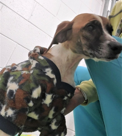 Ashland Co. Humane Society needs your help!
